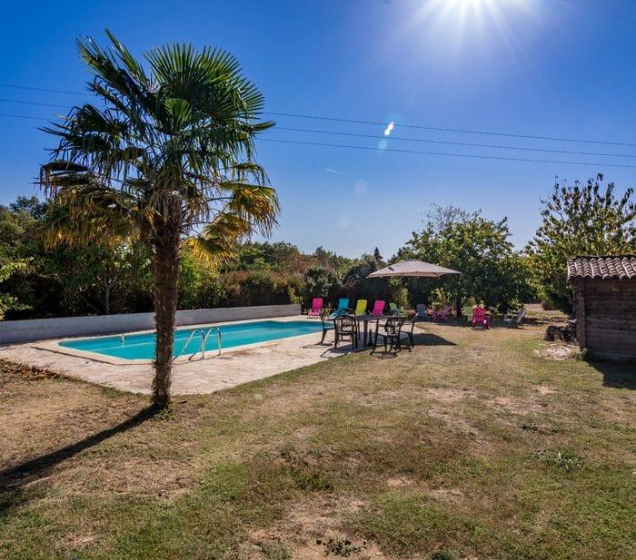 La piscine et son palmier.
